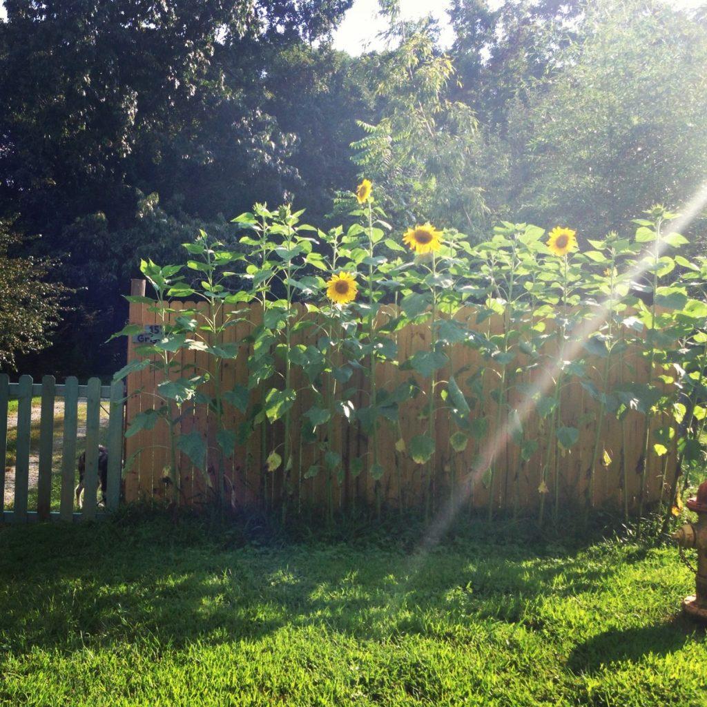 Was Sie alles über Gartenpumpen wissen sollten