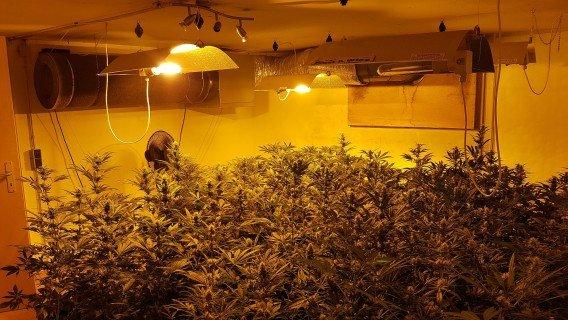 Polizei entdeckt Cannabisplantage nach Wohnungsbrand